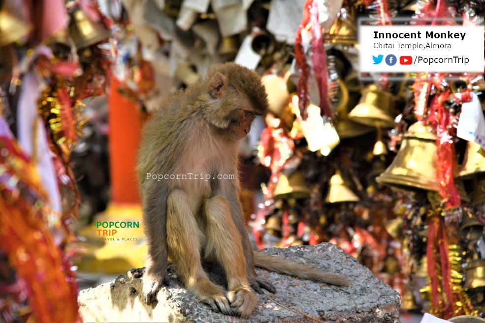 Monkey innocent